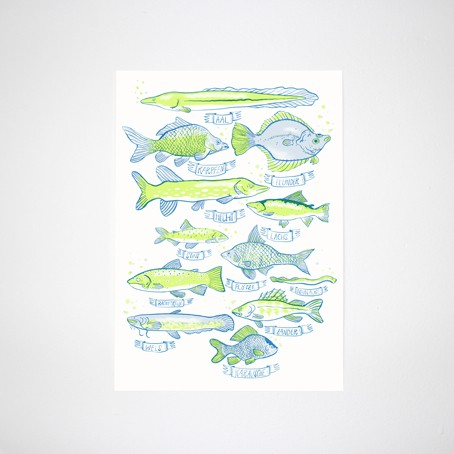 Heimische Fische Poster
