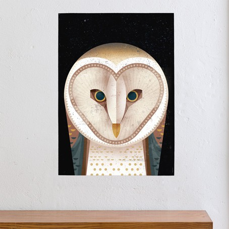 Barn Owl / SALE