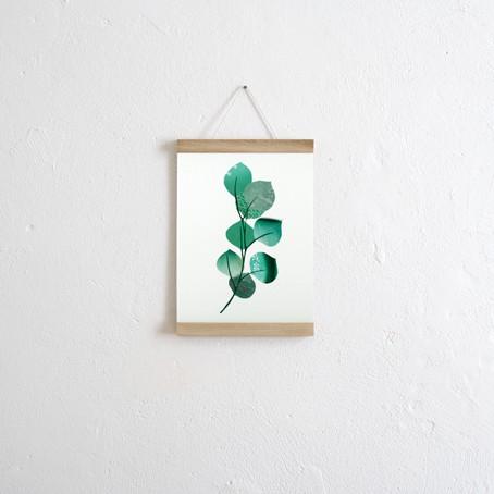 Set / Eukalyptus + Posterleiste Eiche A4