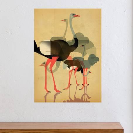 Dieter Braun- Ostriches