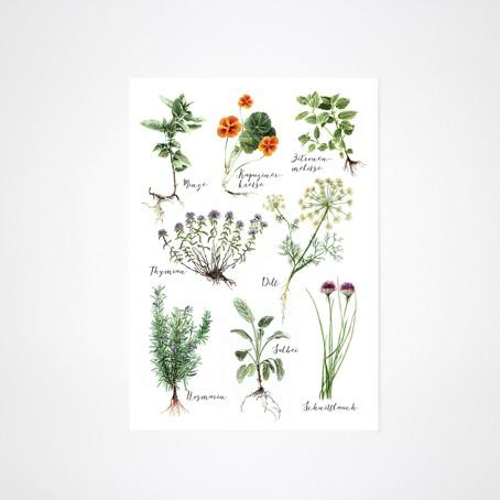 Küchenkräuter Art Print A3